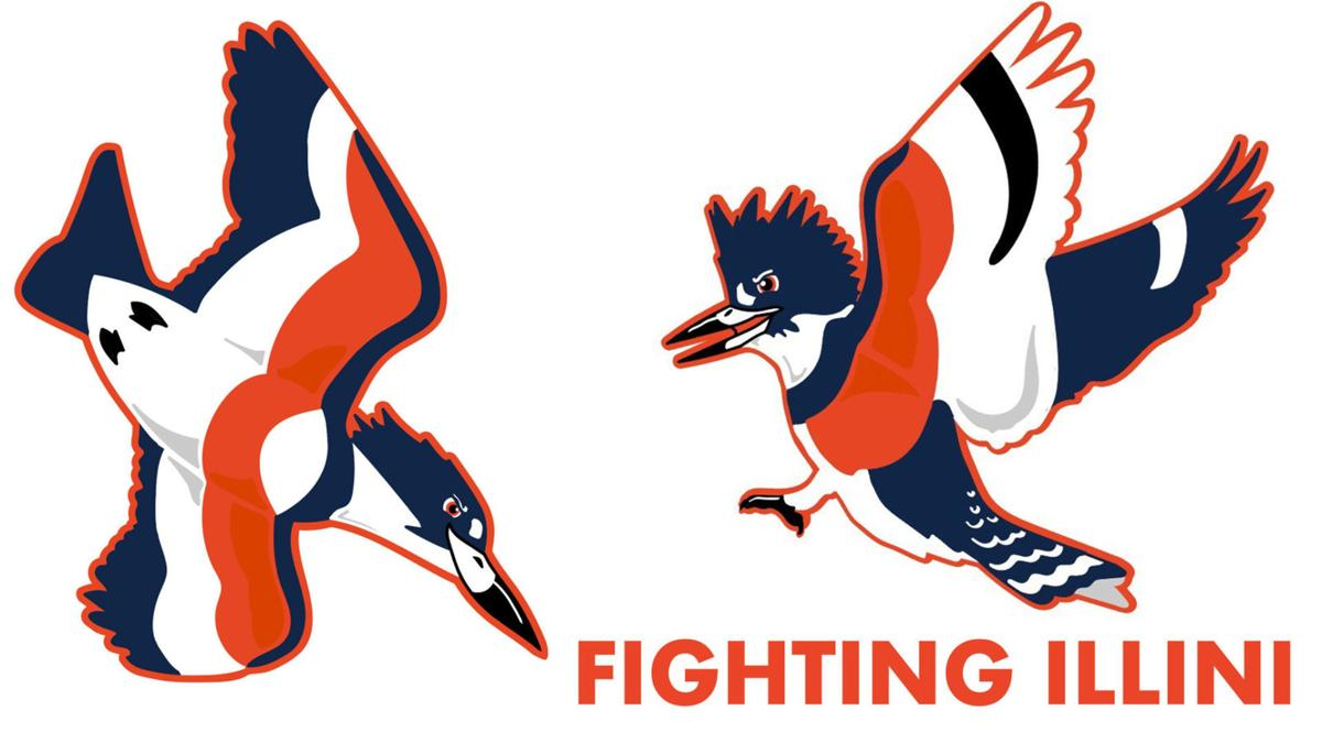 Belted Kingfisher Advances As University Of Illinois New Mascot State And Regional Herald Review Com