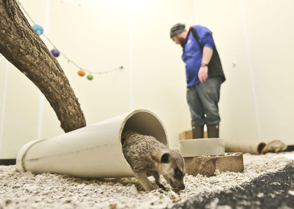 🐒 Critters of Decatur: Scovill Zoo through the years | Local