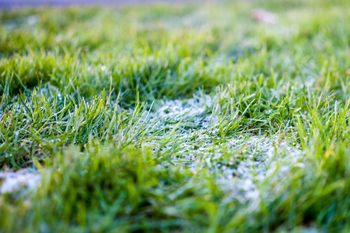 How to get a lush green lawn your neighbors will envy for How often should you mow your lawn