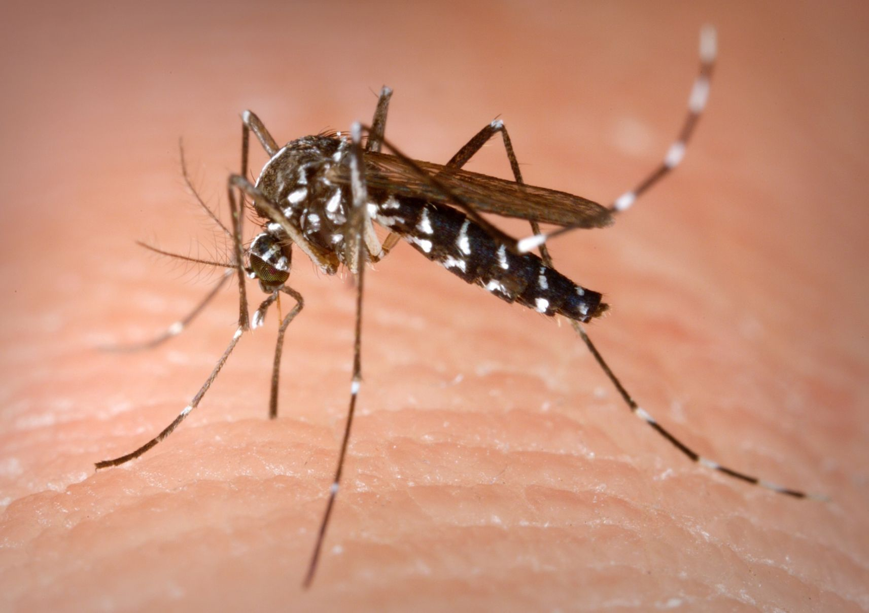 First human West Nile Virus death reported in IL for 2017