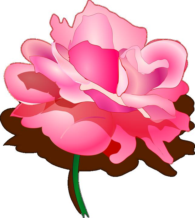 Pink Link