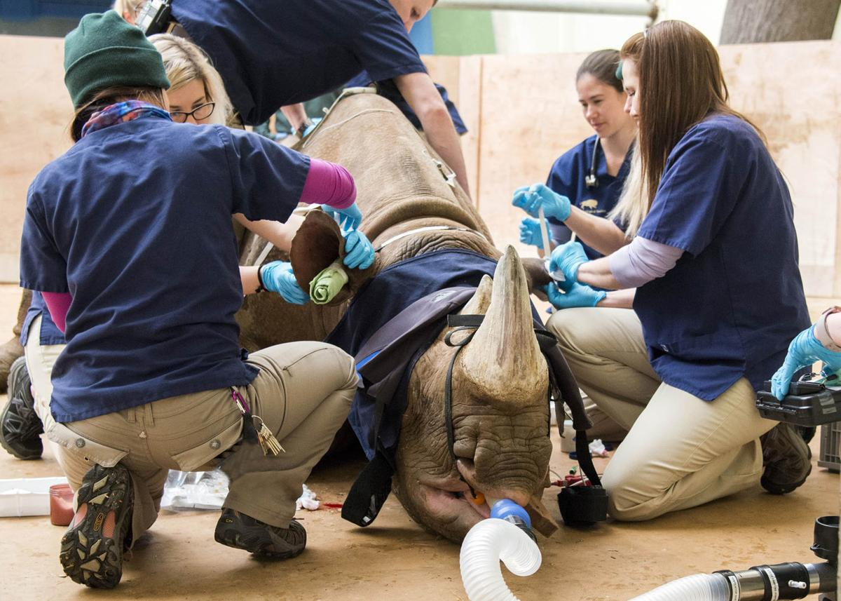 rhinoscan2