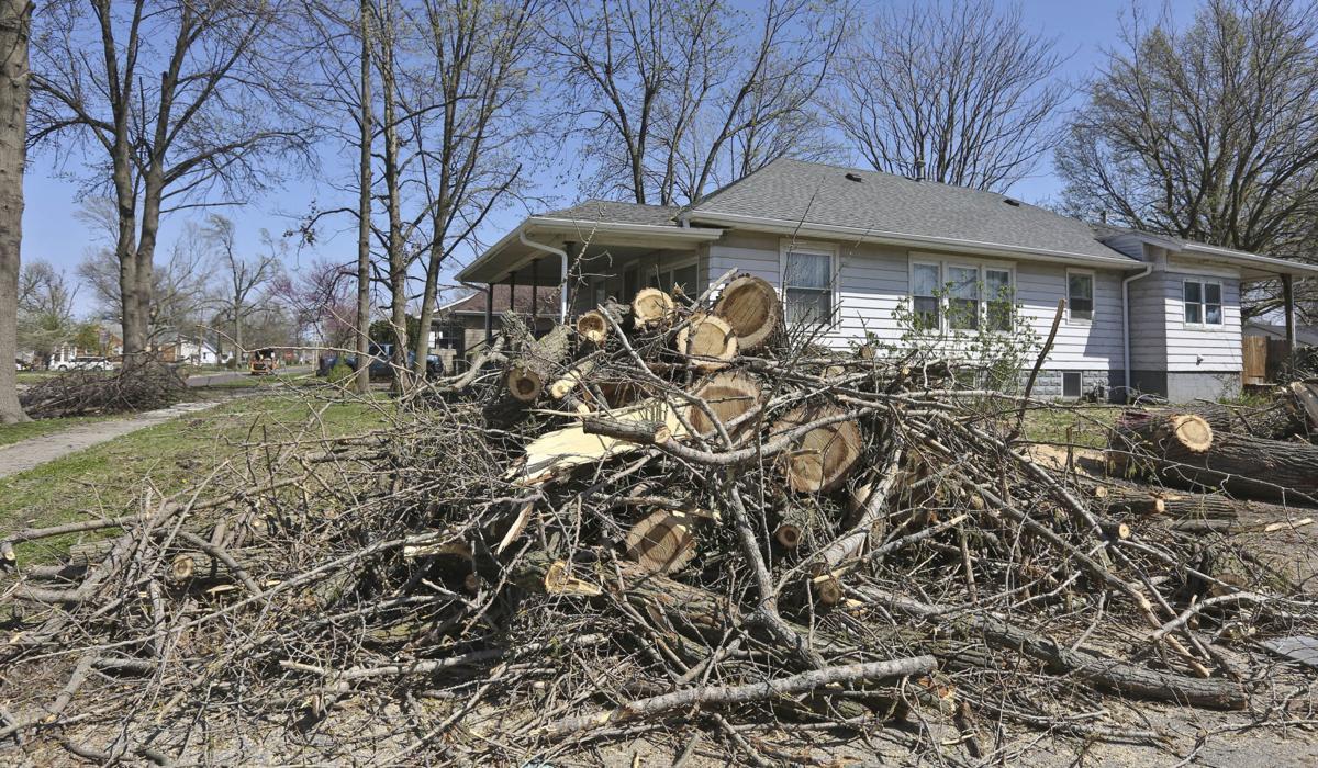 Tree limbs in April