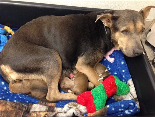 Phoenix police rescue puppy trapped in pipe after 10 hours
