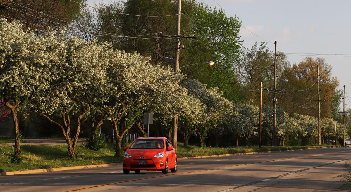 Decatur named a Tree City USA by Arbor Day Foundation