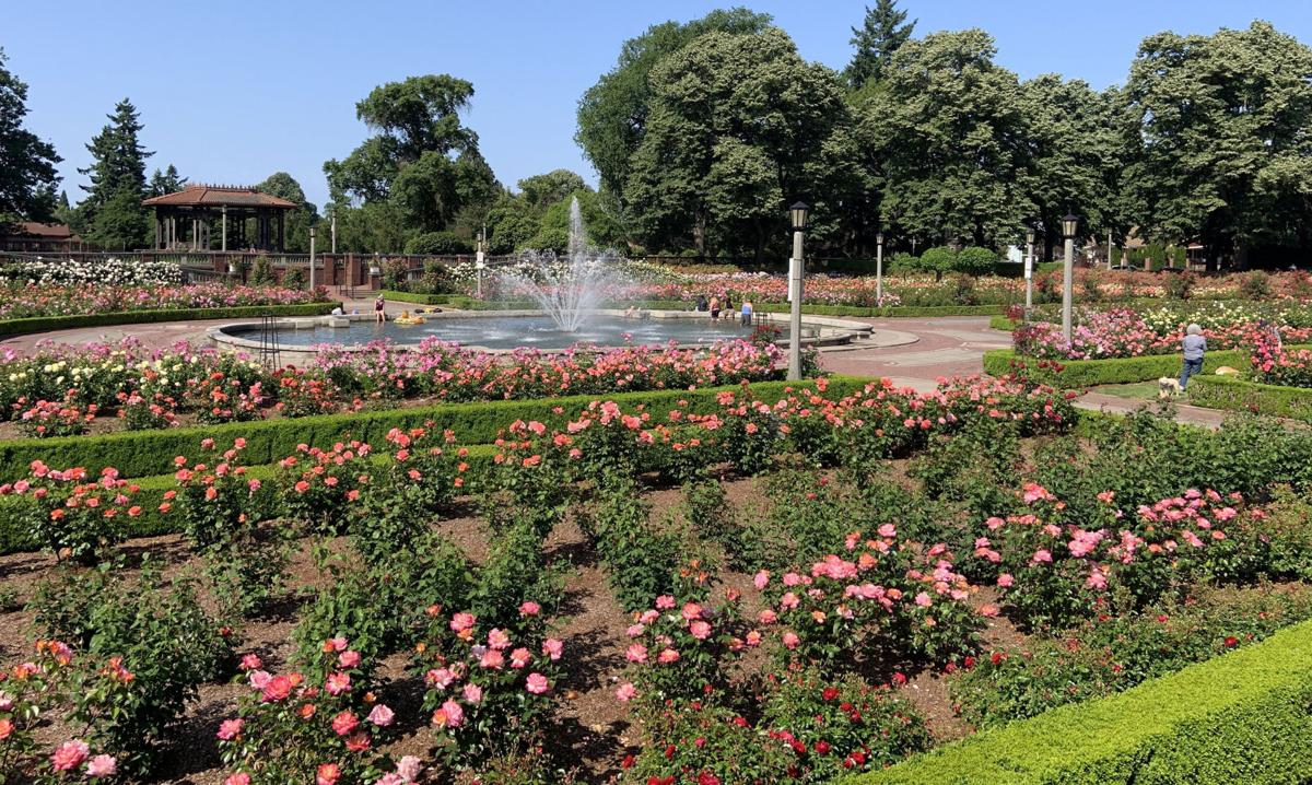 The Peninsula Park Rose Garden in Portland on May 31, 2019.