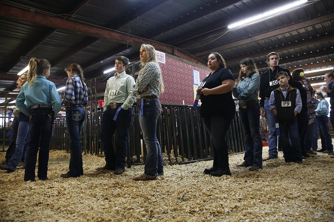 Junior Livestock Auction | Multimedia | herald-zeitung com