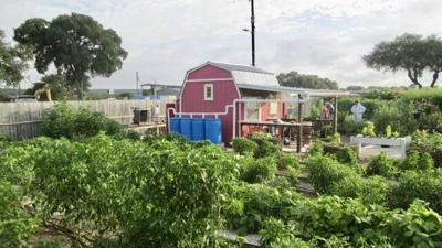 Texas A&M Agrilife Extension Office garden