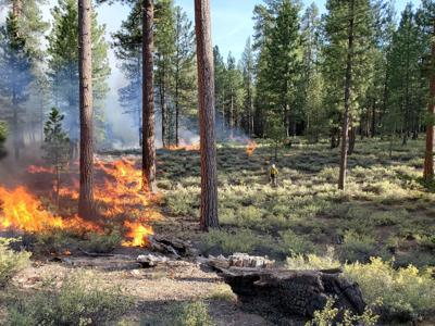 Prescribed burn ODF