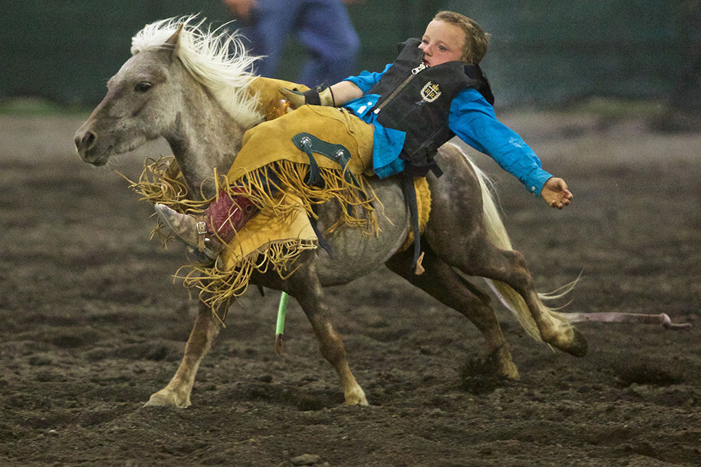 Local Look At The Rodeo Local News Heraldandnews Com