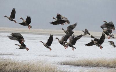 12-04 Winter Wings