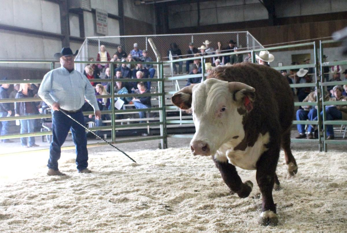 59th annual Bull & Horse expected to draw thousands | Local