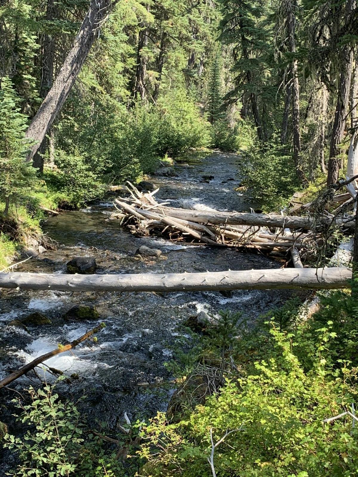 Trapper Creek.jpg