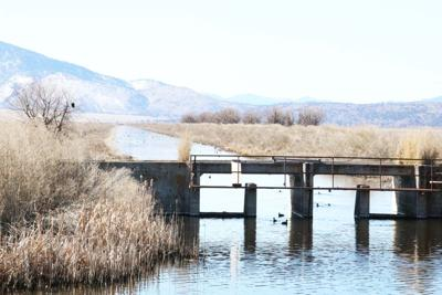 Lower Klamath refuge releases water for ag use