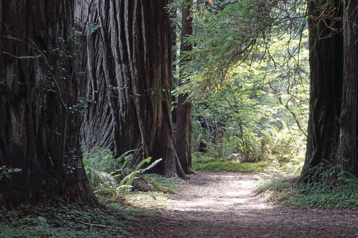 han-20190802-redwoods 1.jpg