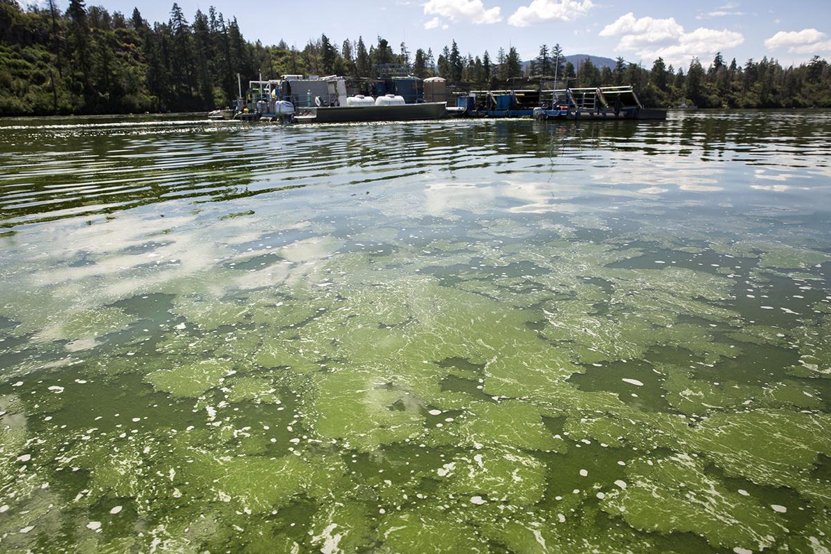 New Earth Algae harvesting and processing