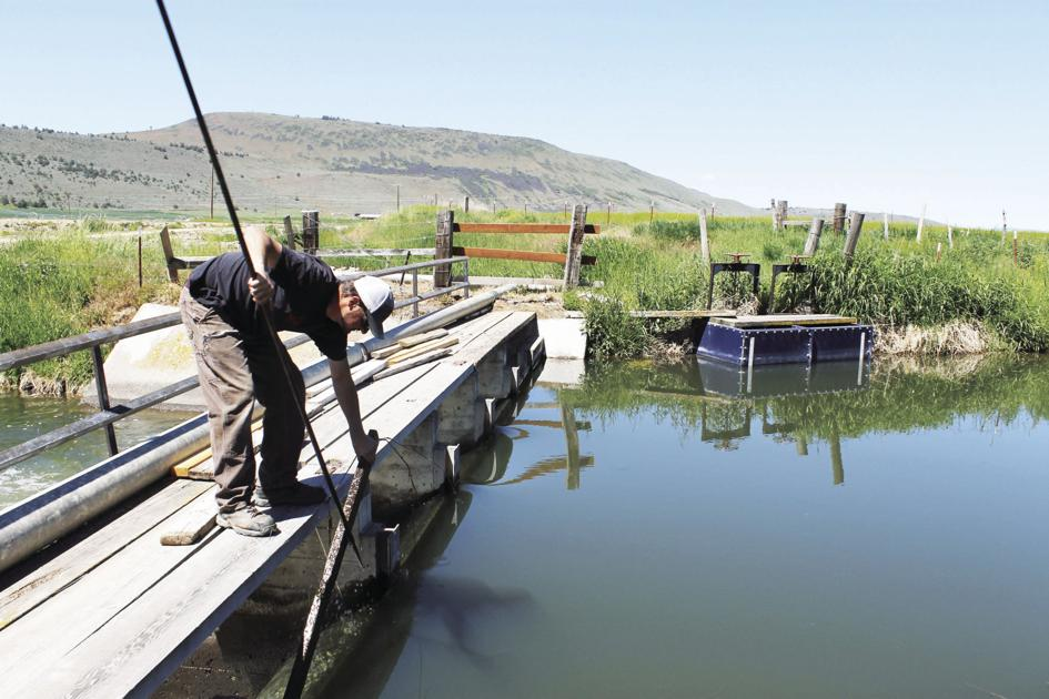 Court rules in favor of Klamath Irrigation District, state water rights - Herald and News