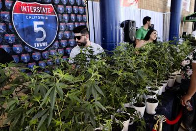 California Marijuana Seed to Sale