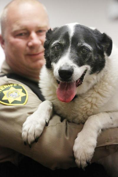 Legal pot puts drug dogs' jobs on the line   Ap News