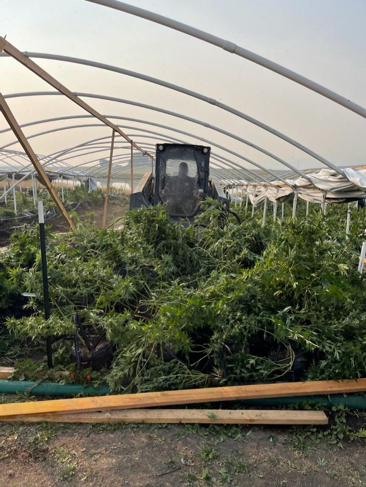 Marijuana destruction