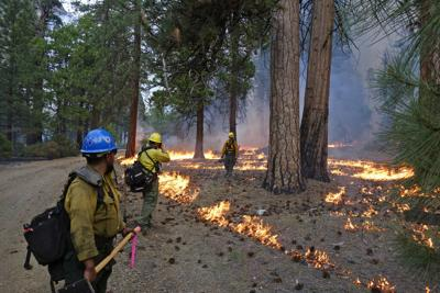 Wildfires Prescribed Burns