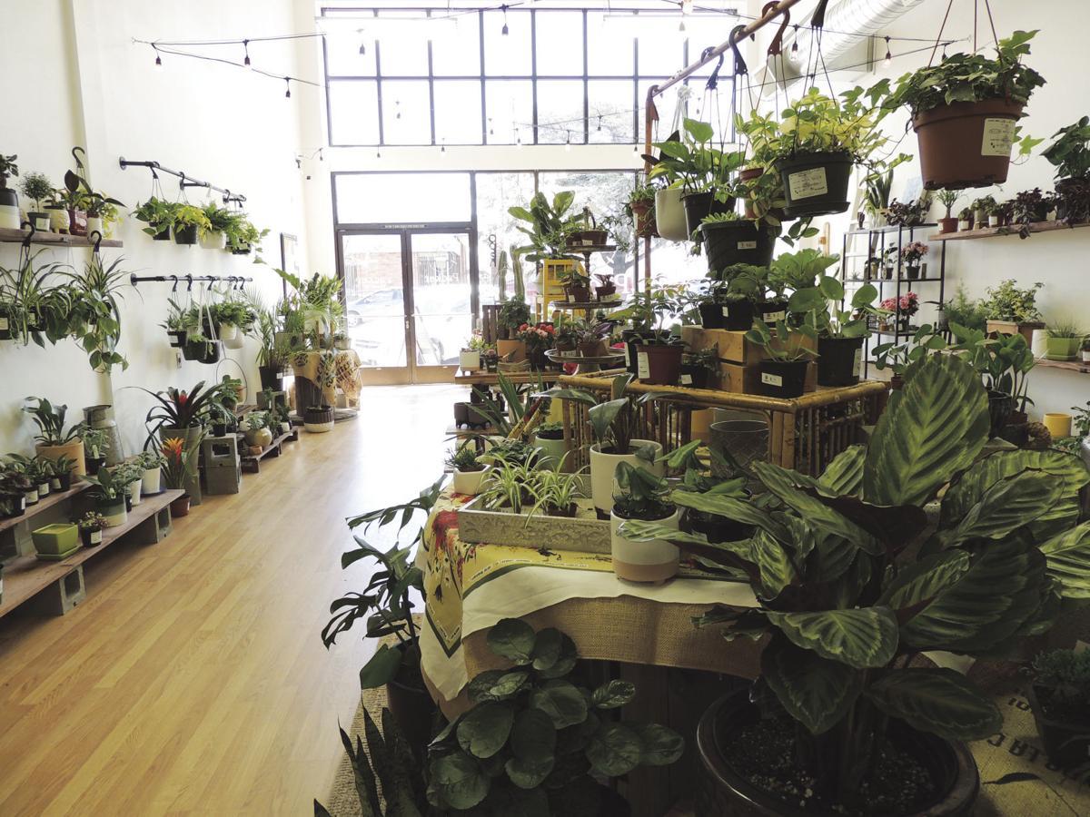 Packer Plant Co plants