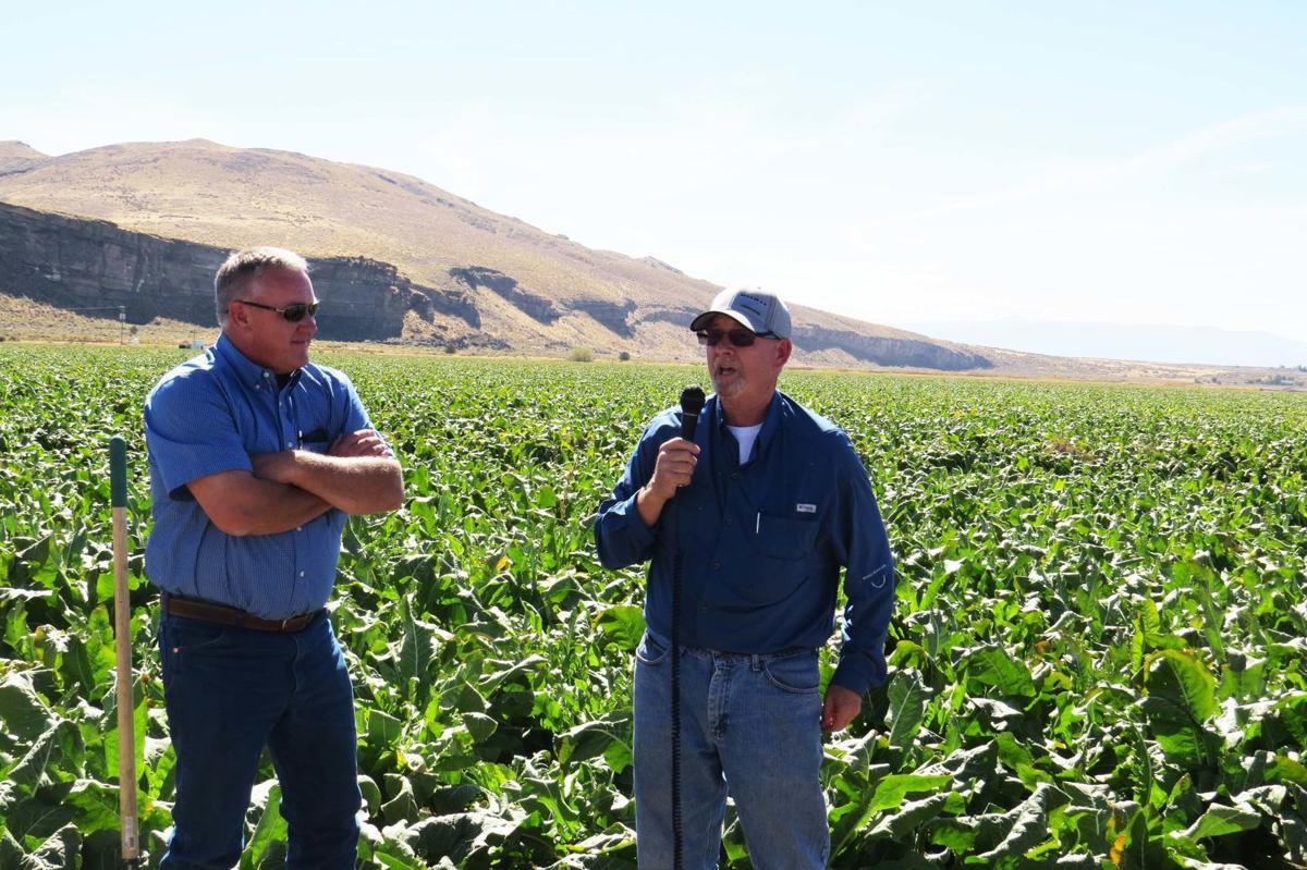 Niche markets: Tulelake producer grows peppermint, horseradish