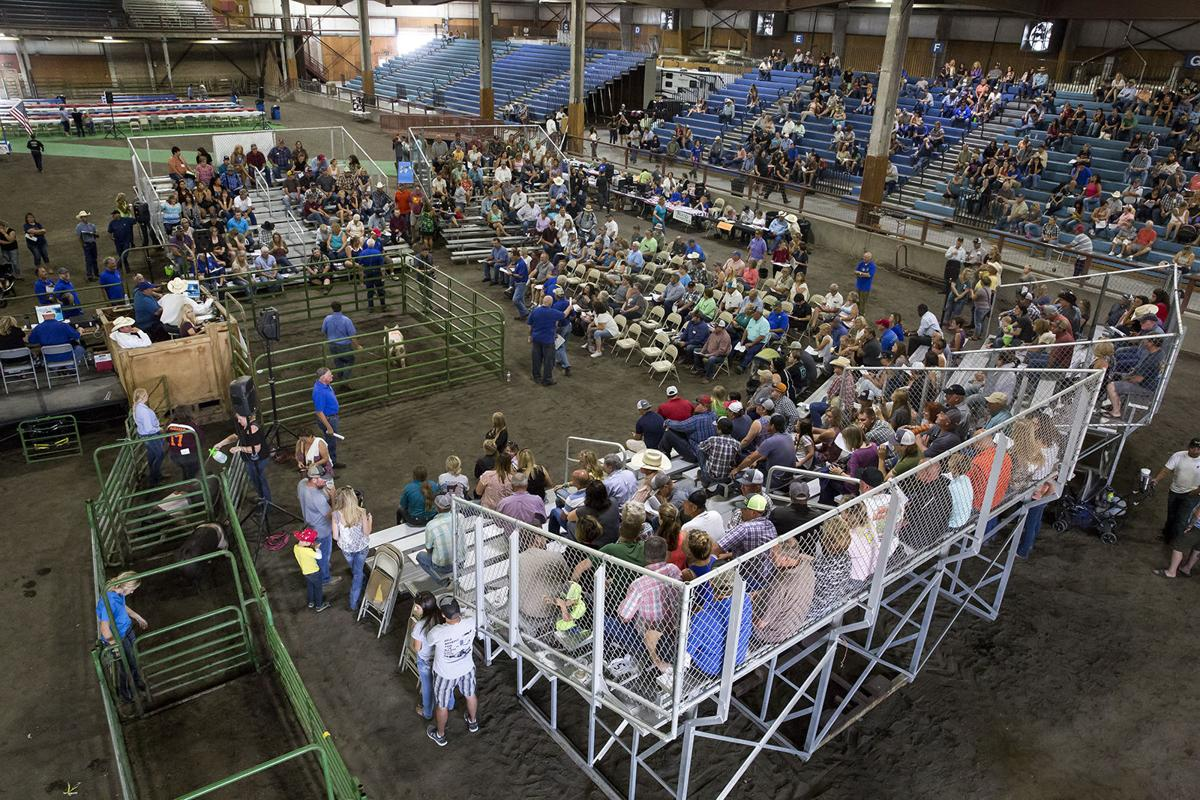High bids and high hopes at the klamath county rotary livestock livestock rotary auction 2017 altavistaventures Images