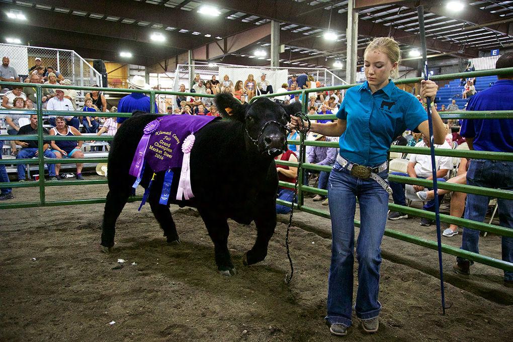 2016 klamath county fair 4 h ffa rotary livestock auction results 2016 4 hffa rotary livestock auction thecheapjerseys Image collections