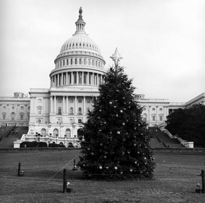 han-20180906-capitol tree 3.jpg