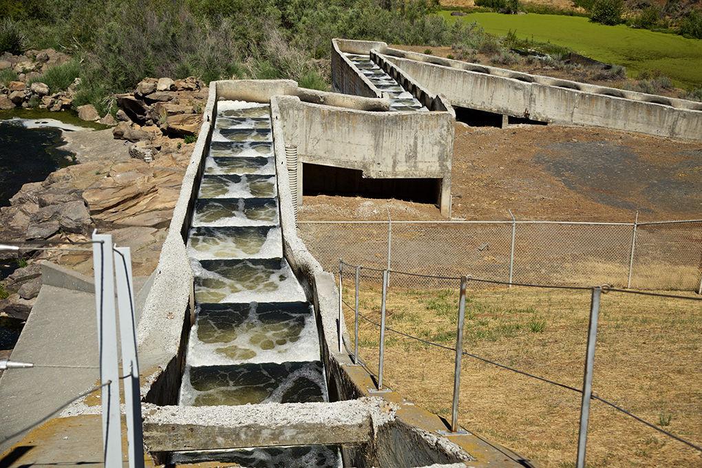 Object Lesson: John C  Boyle Dam fish ladder | Community