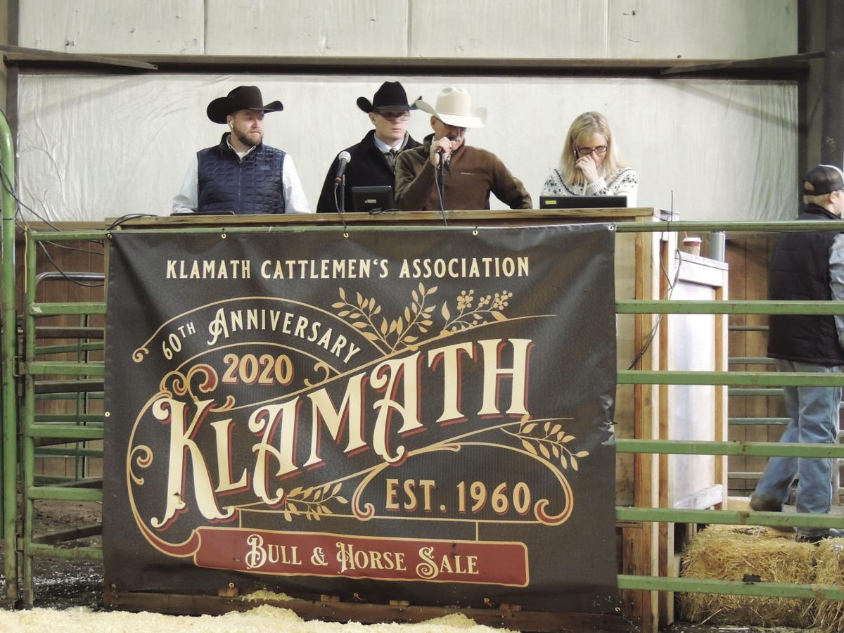 60th Anniversary of the Bull Sale