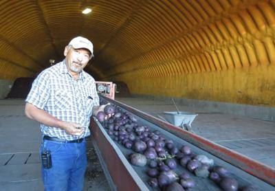 Wong Potatoes contained COVID-19 outbreak in April