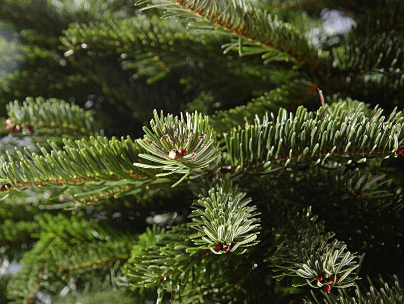 christmas trees keep christmas trees from drying out - How To Keep Christmas Tree From Drying Out