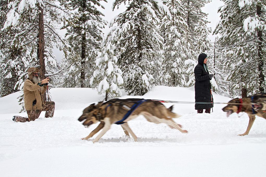 Lack of snow dooms dog races local news heraldandnews chemult sled dog races gallery publicscrutiny Choice Image