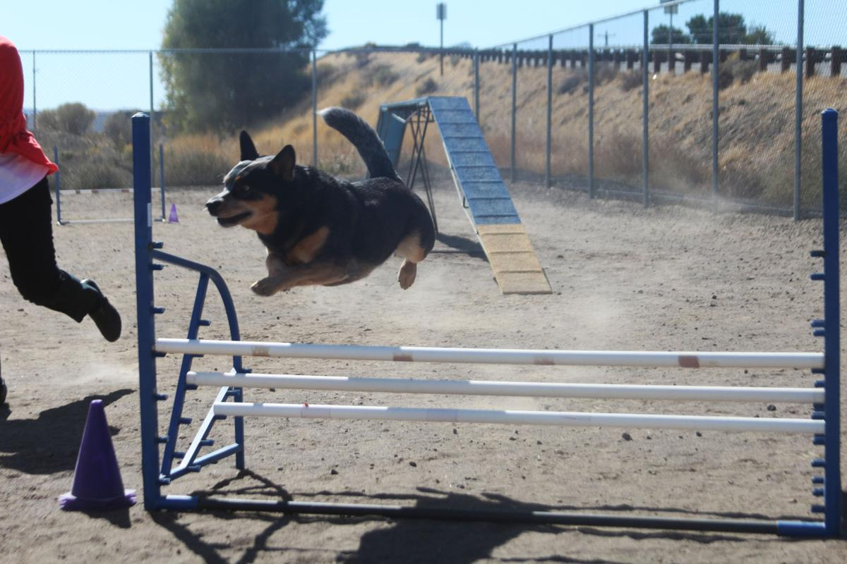 Dog Training In Klamath Falls