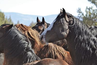 Horse gather