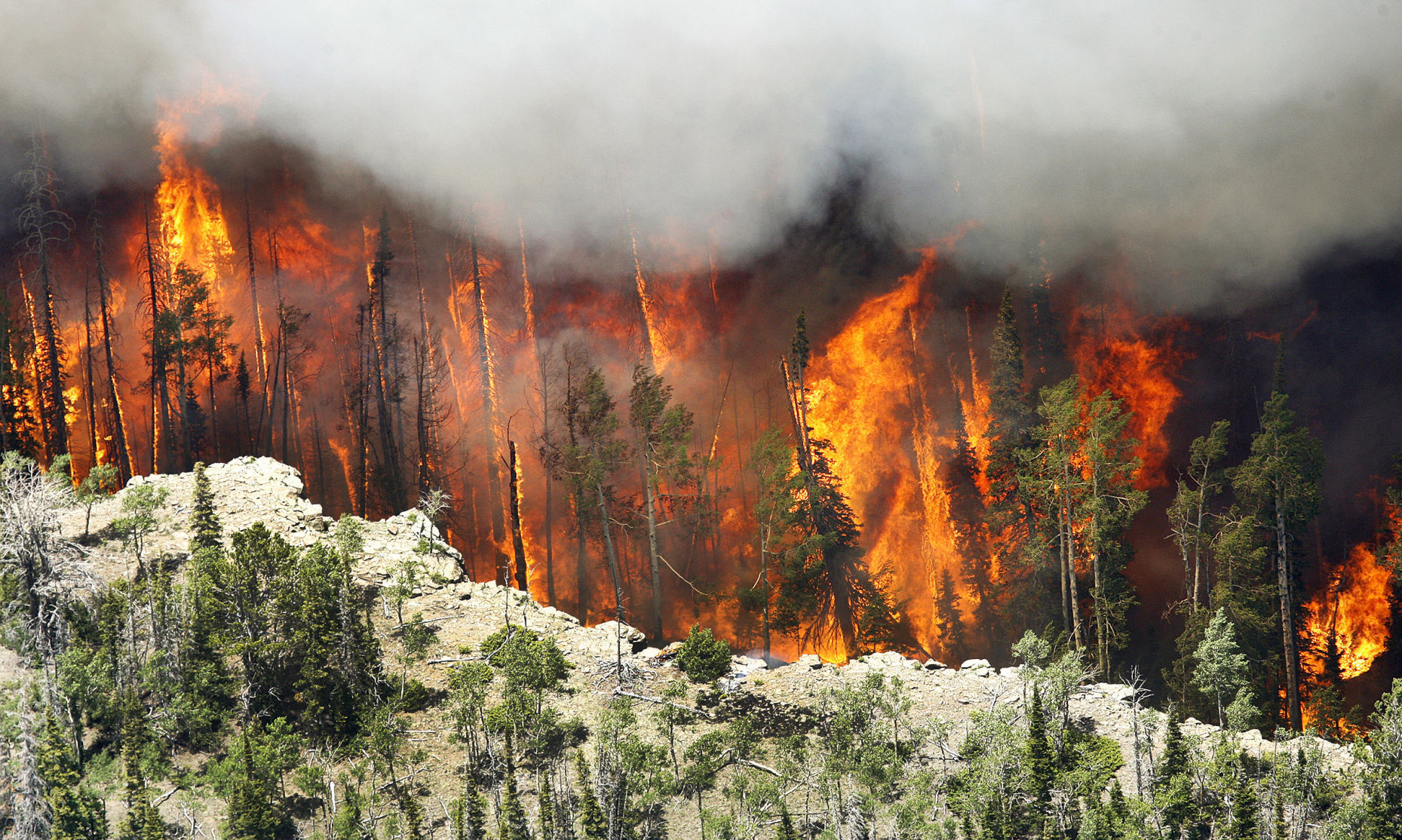 Forest fire battle costs a record $2 billion