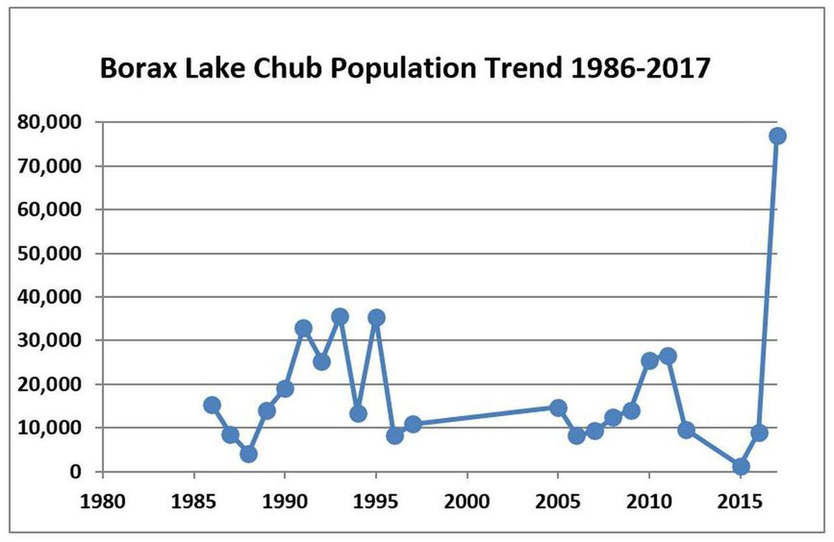 Borax Lake chub population