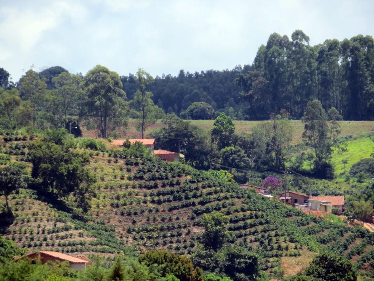 Freeman coffee farm Brazil