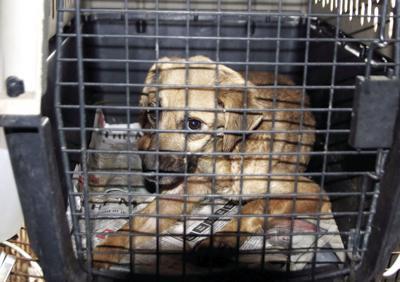 SPCA of Texas seizes animals