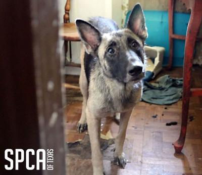 SPCA seizes four dogs