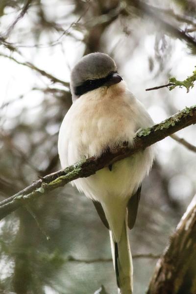 A predator bird