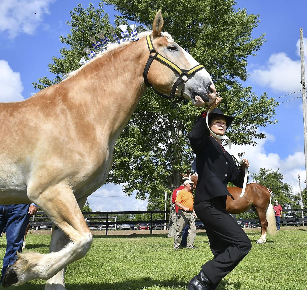 20200730-nws-10year4hmemberbios horse show