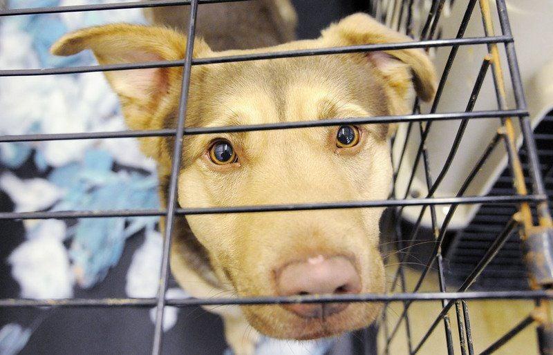 Animal advocates seek solutions, not 'last resorts' | Local