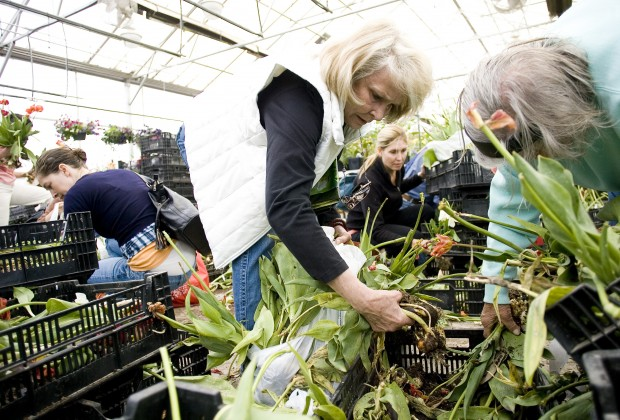 Bargain tulip sale brings crowds to Thanksgiving Point