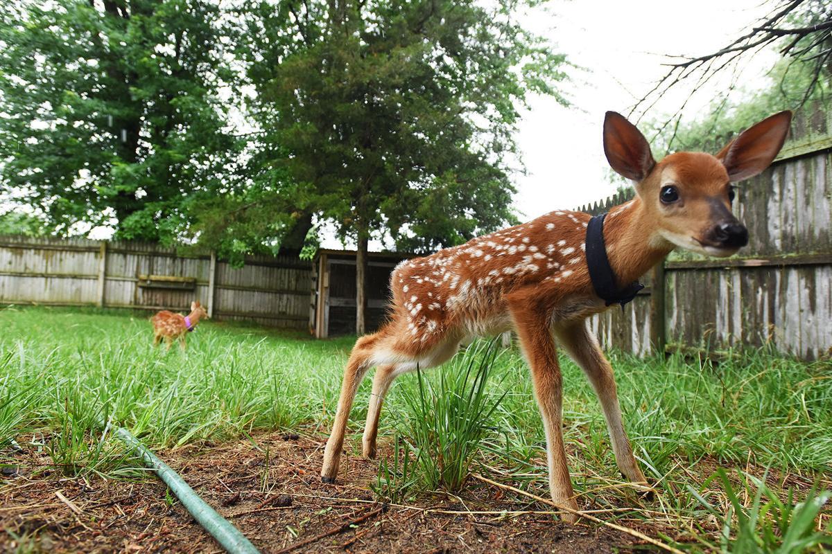 210626-HP-wildlife-rehab2-photo.jpg