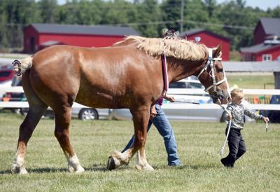 Van Buren Youth Fair horse photo