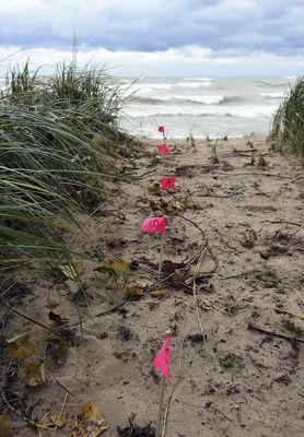 Beach dwellers get city backing