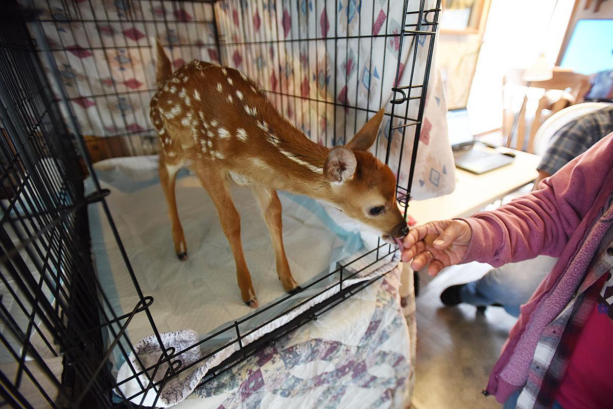210626-HP-wildlife-rehab3-photo.jpg